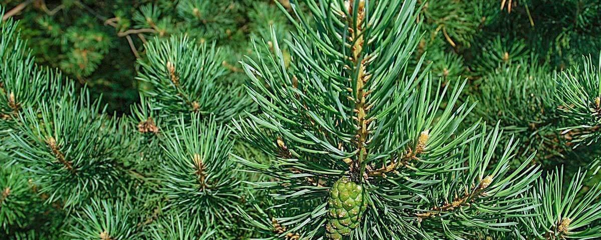 fertilisation arbres